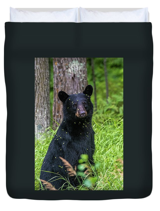 Black Bear Duvet Cover featuring the photograph Black Bear by Paul Freidlund