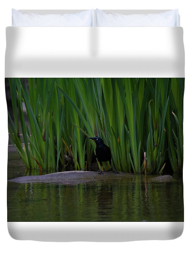Black Bird Duvet Cover featuring the photograph Black Beauty by Donald Crosby