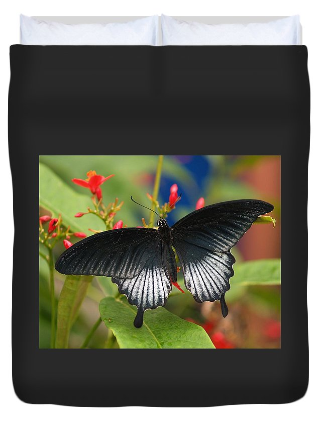 Butterfly Duvet Cover featuring the photograph Black Beauty by Gaby Swanson