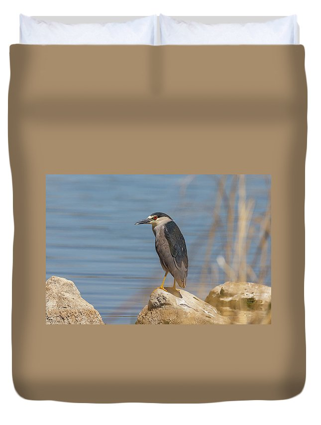 Bird Duvet Cover featuring the photograph Black Crowned Night Heron In Colorado by Tony Hake