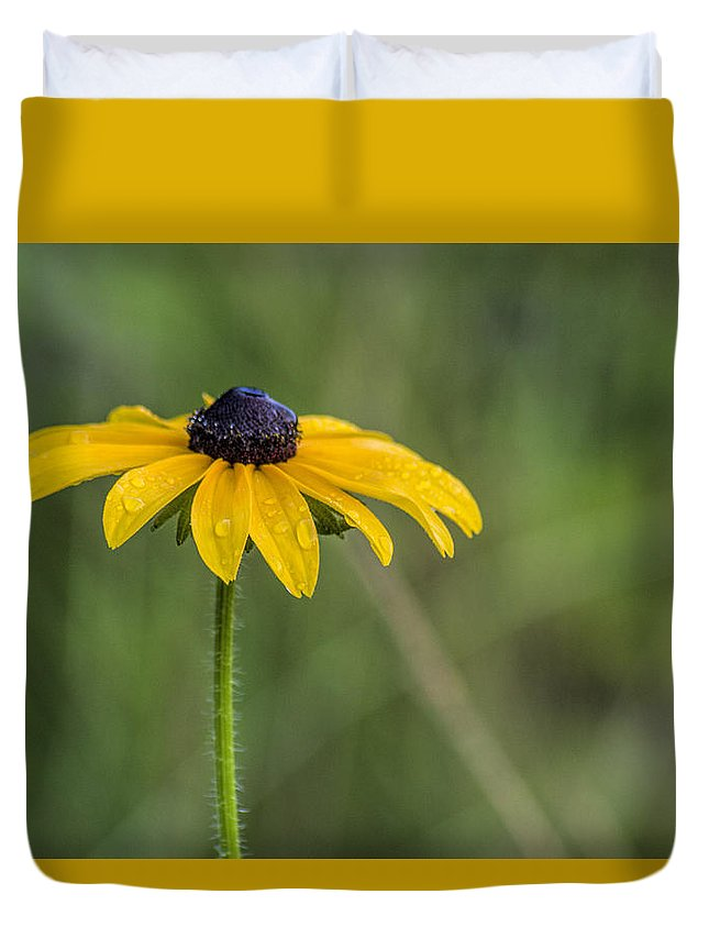 Black Eyed Susan Duvet Cover featuring the photograph Black Eyed Susan by David Stone