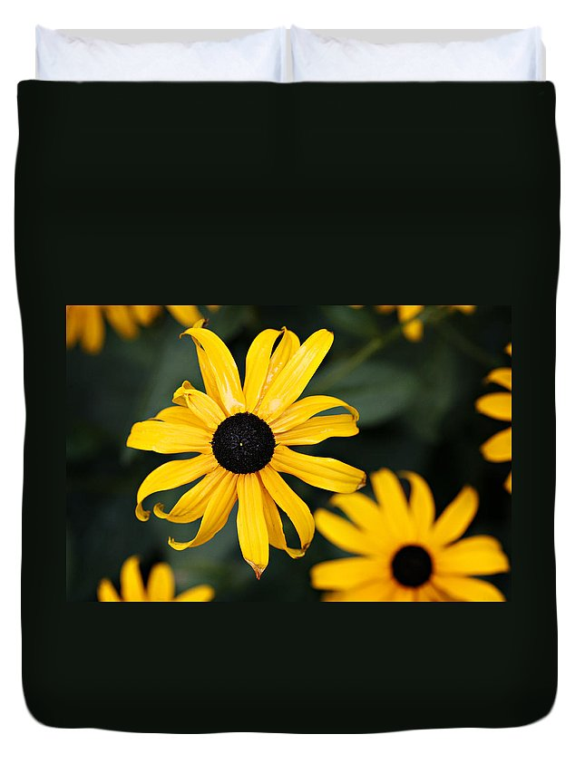 Black Eyed Susan Duvet Cover featuring the photograph Black Eyed Susan by Marilyn Hunt