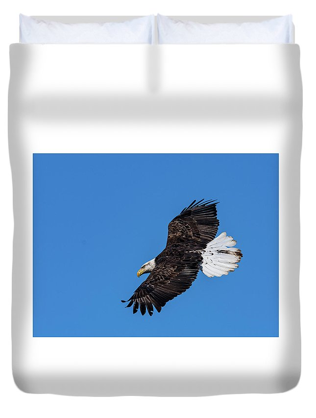 Black Tail Feather Bald Eagle Soaring Hunting Fish Duvet Cover featuring the photograph Black Feather Bald Eagle by David Heemsbergen
