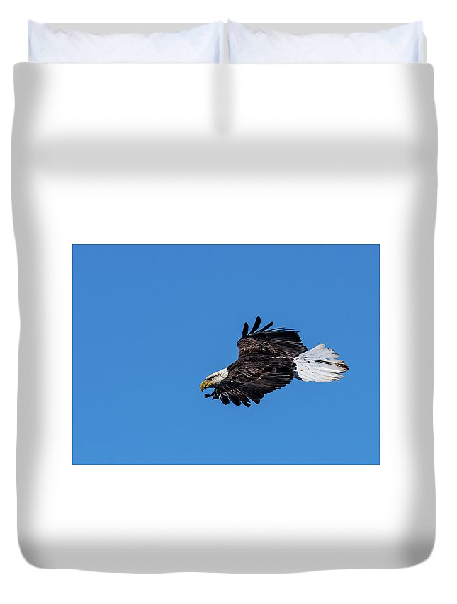 Bald Eagle Black Feather Hunting Soaring Duvet Cover featuring the photograph Black Feather Eagle Hunting by David Heemsbergen