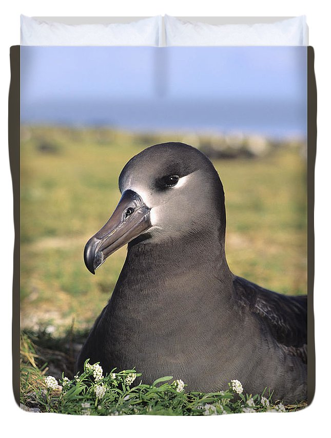 Albatross Duvet Cover featuring the photograph Black Footed Albatross by Reggie David - Printscapes