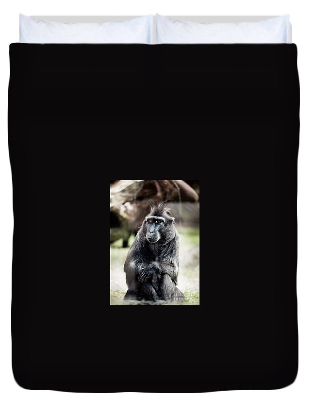 Macaque Duvet Cover featuring the photograph Black Macaque Monkey Sitting by Arletta Cwalina