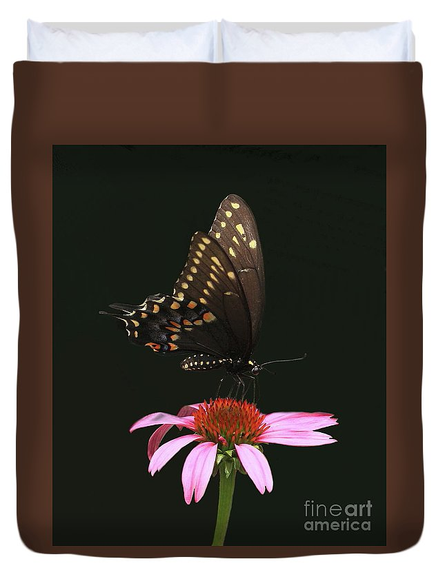Eastern Black Swallowtail Butterfly Duvet Cover featuring the photograph Black On Black by Gail Huddle
