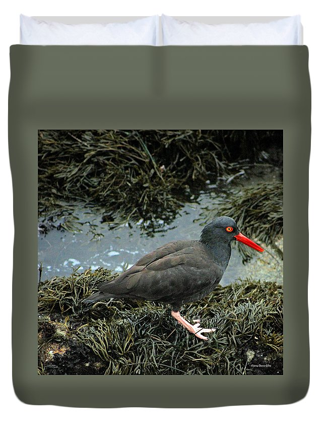 Black Duvet Cover featuring the photograph Black Oystercatcher by Deana Glenz