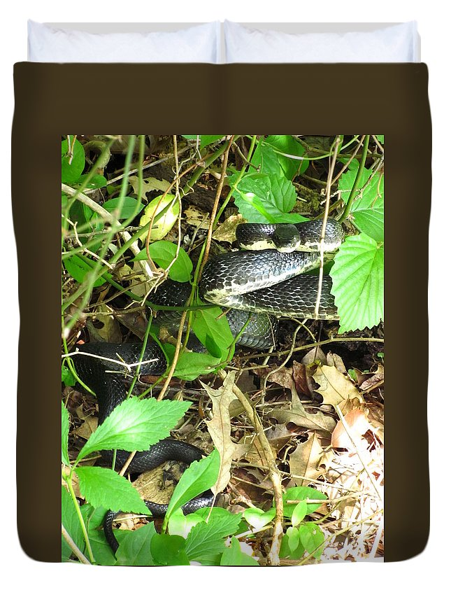 Maryland Black Rat Snake Images Nonvenomous Black Snake Photograph Prints Striking Position Maryland Reptile Images Black Snake Prints Duvet Cover featuring the photograph Black Rat Snake by Joshua Bales