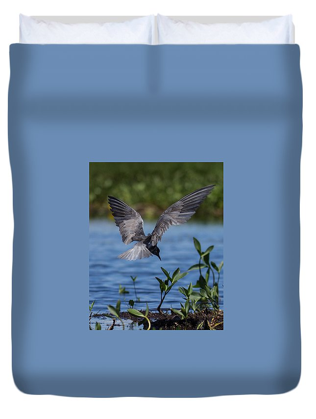 Black Tern Duvet Cover featuring the photograph Black Tern by Rhonda Robinson
