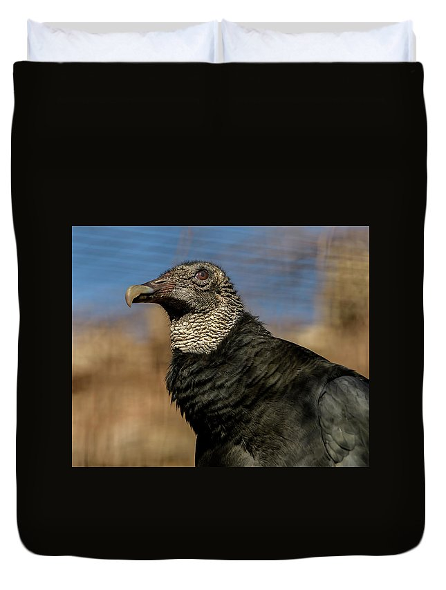 Black Vulture Duvet Cover featuring the photograph Black Vulture 1 by David Pine
