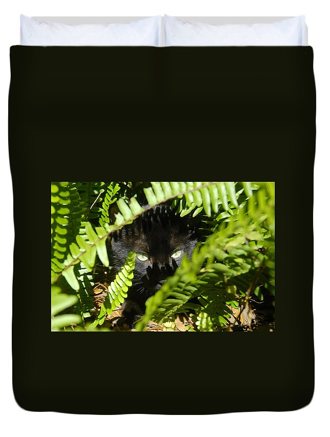 Cat Duvet Cover featuring the photograph Blackie In The Ferns by David Lee Thompson