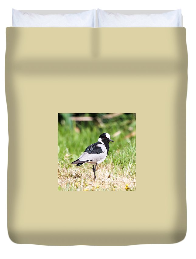 Blacksmith Lapwing Duvet Cover featuring the photograph Blacksmith Lapwing by Dave Whited
