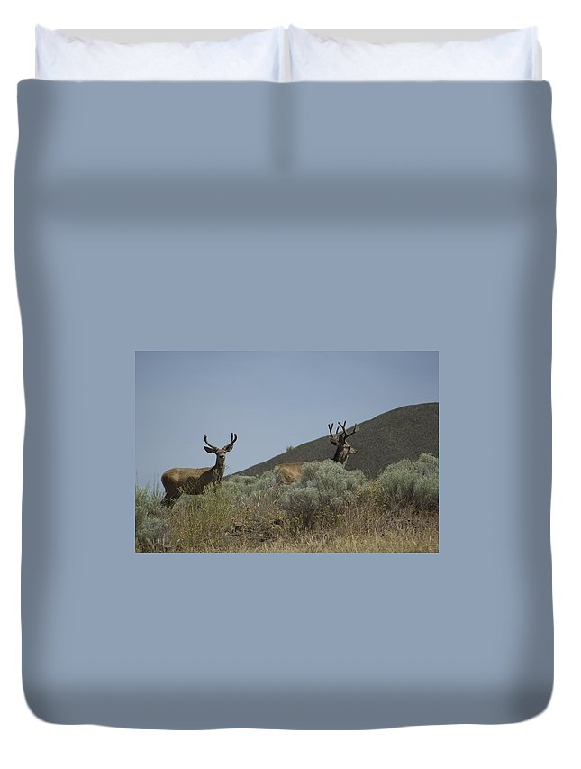 Buck Duvet Cover featuring the photograph Blacktail Deer 2 by Sara Stevenson