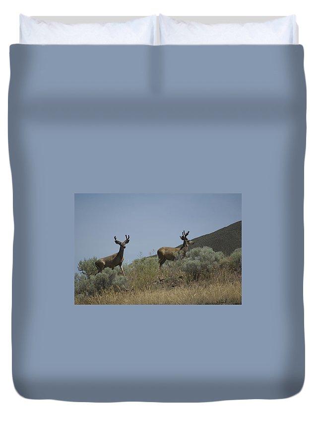 Buck Duvet Cover featuring the photograph Blacktail Deer 3 by Sara Stevenson