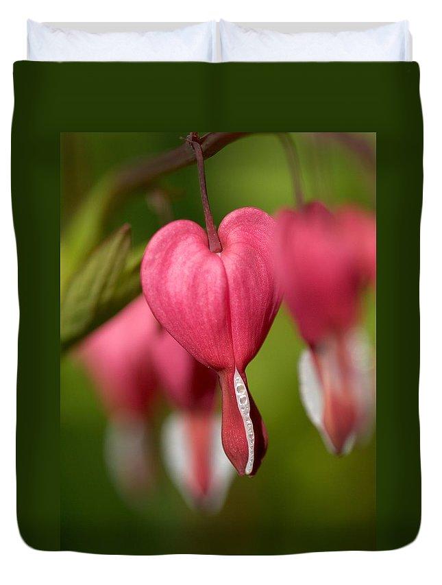 Lehtokukka Duvet Cover featuring the photograph Bleeding Heart by Jouko Lehto
