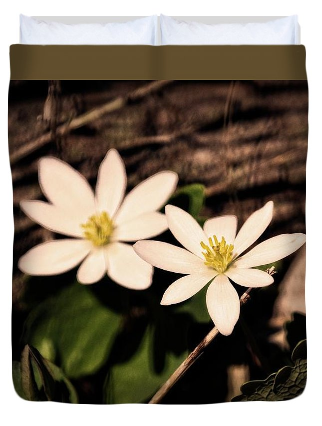 Bloodroot Duvet Cover featuring the photograph Bloodroot In Spring by Mary Machare