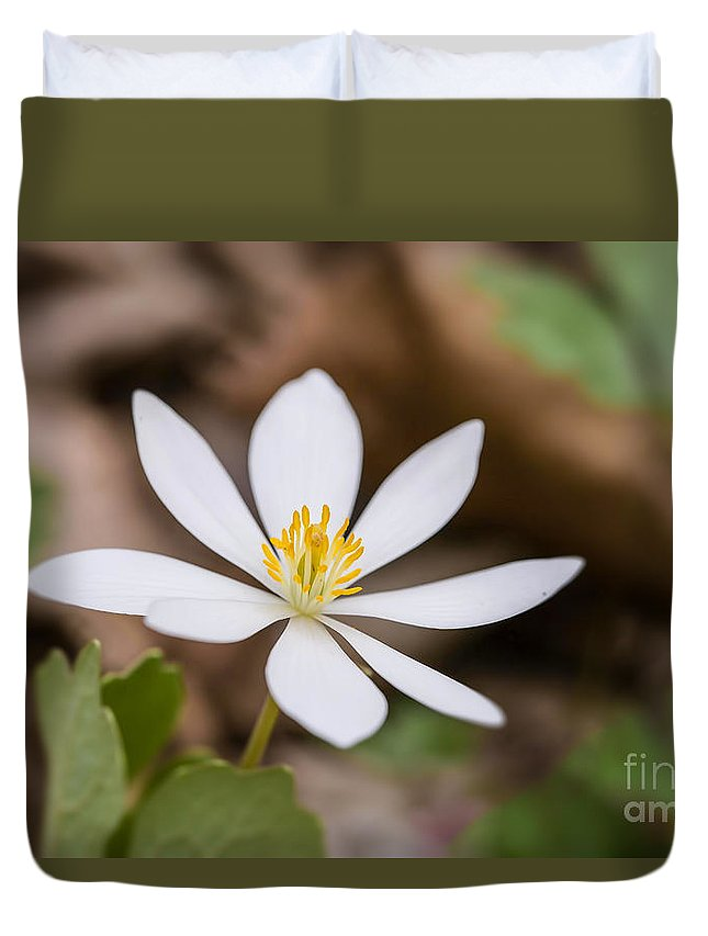 Bloodroot Duvet Cover featuring the photograph Bloodroot Wildflower by Nikki Vig