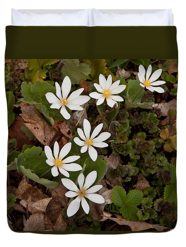Bloodroot Duvet Cover featuring the photograph Bloodroot Wildflowers #1203 by Irwin Barrett