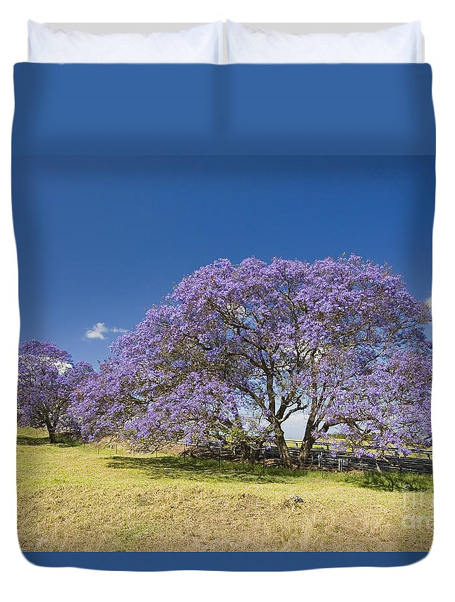 Afternoon Duvet Cover featuring the photograph Blossoming Jacaranda by Dave Fleetham - Printscapes