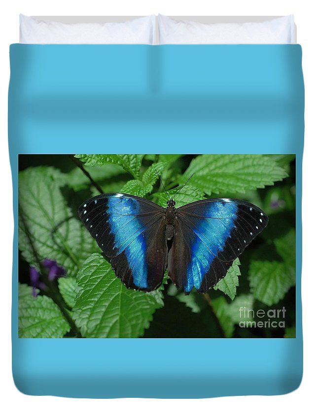 Blue Duvet Cover featuring the photograph Blue And Black by Kathleen Struckle