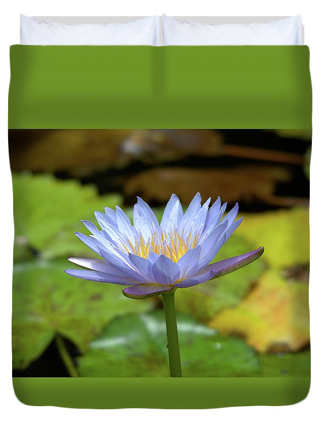 Roy Williams Duvet Cover featuring the photograph Blue And Yellow Water Lily by Roy Williams