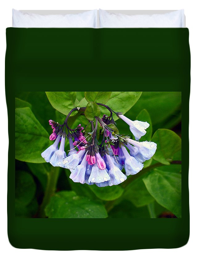 Native Landscape Duvet Cover featuring the photograph Blue Bells by Steve Karol