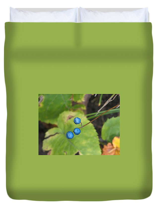 Blue Duvet Cover featuring the photograph Blue Berries by Kelly Mezzapelle