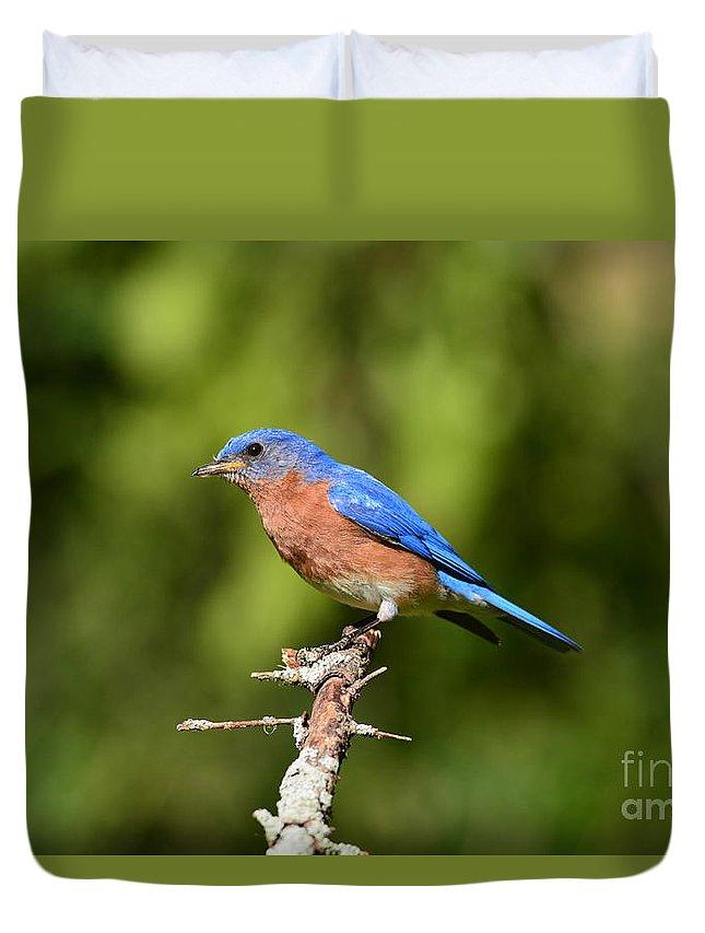 Blue Bird Duvet Cover featuring the photograph Blue Bird by David Murray
