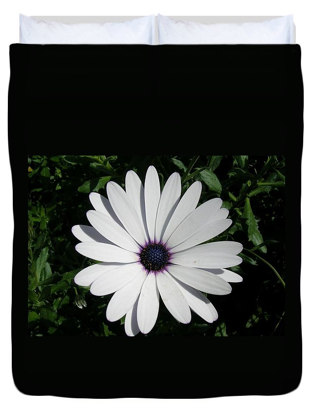 Daisy Duvet Cover featuring the photograph Blue Center Daisy by Valerie Ornstein