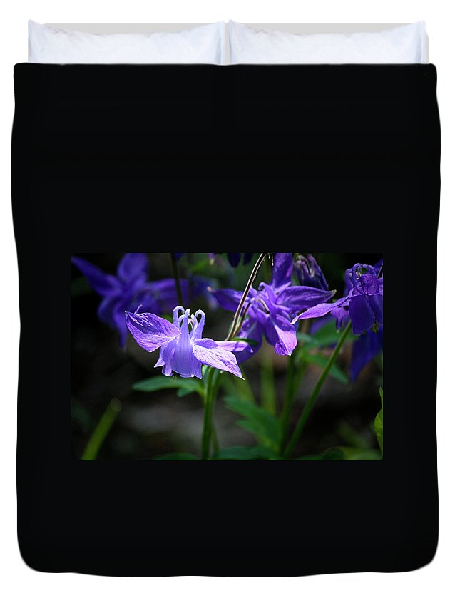 Columbine Duvet Cover featuring the photograph Blue Columbines by Teresa Mucha