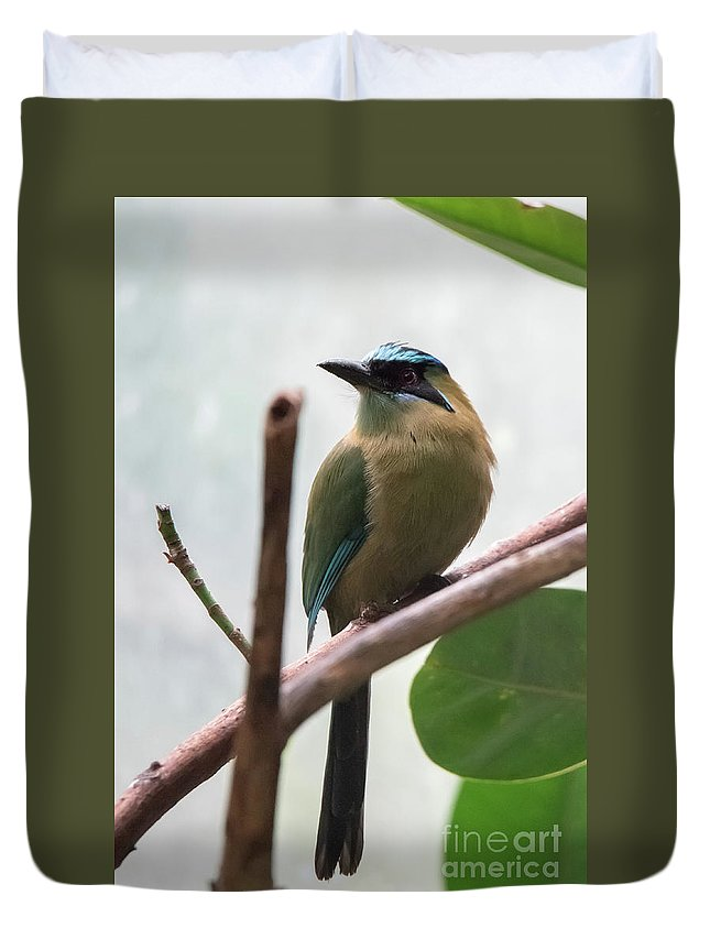 Blue Duvet Cover featuring the photograph Blue-crowned Motmot by Ed Taylor
