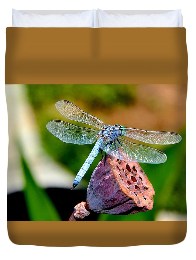 Insect Duvet Cover featuring the photograph Blue Dragonfly On Lotus Seed Pod Back View by Deanne Rotta