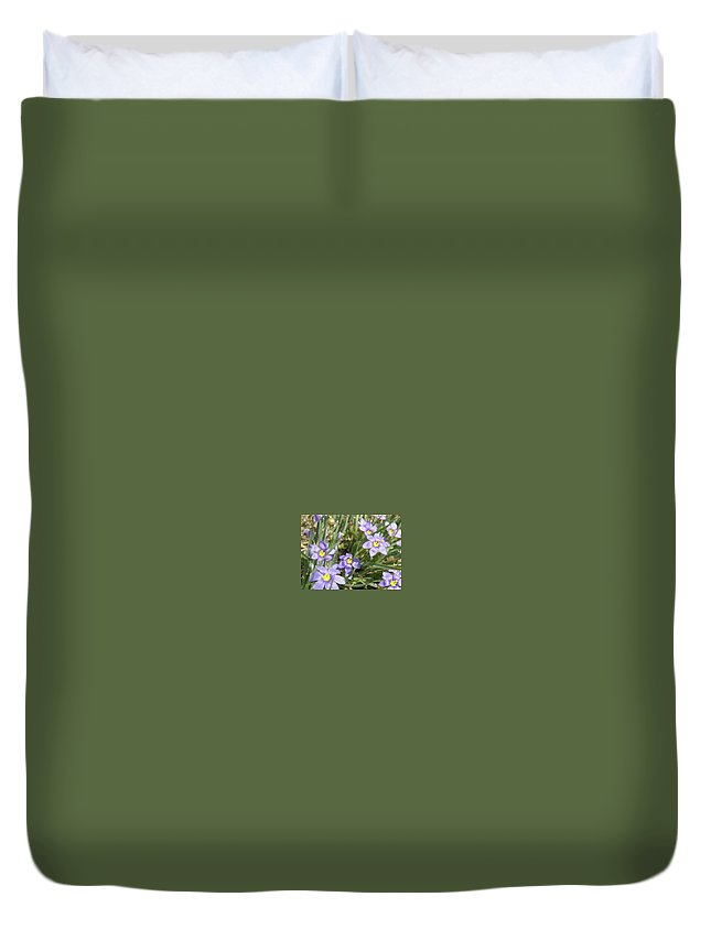 Spring Duvet Cover featuring the digital art Blue Eyed Grass by Amber Stubbs