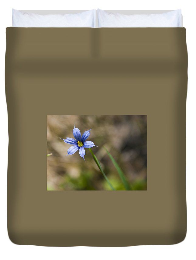 Flower Blue Grass Green Small Little Bright Color Colorful Yellow Flora Nature Duvet Cover featuring the photograph Blue-eyed Grass II by Andrei Shliakhau
