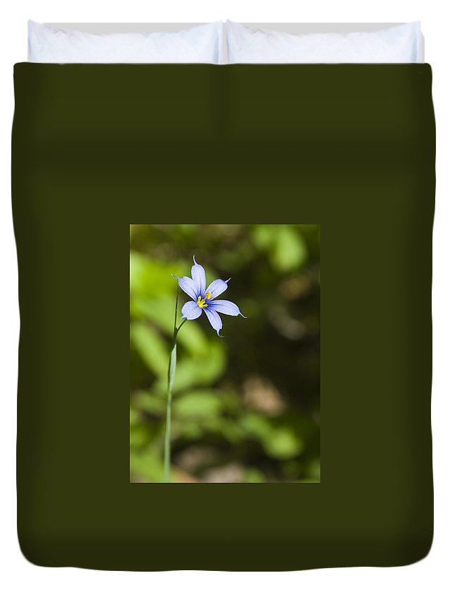 Blue Eye Grass Flower Nature Yellow Green Delicate Small Little Duvet Cover featuring the photograph Blue-eyed Grass IIi by Andrei Shliakhau