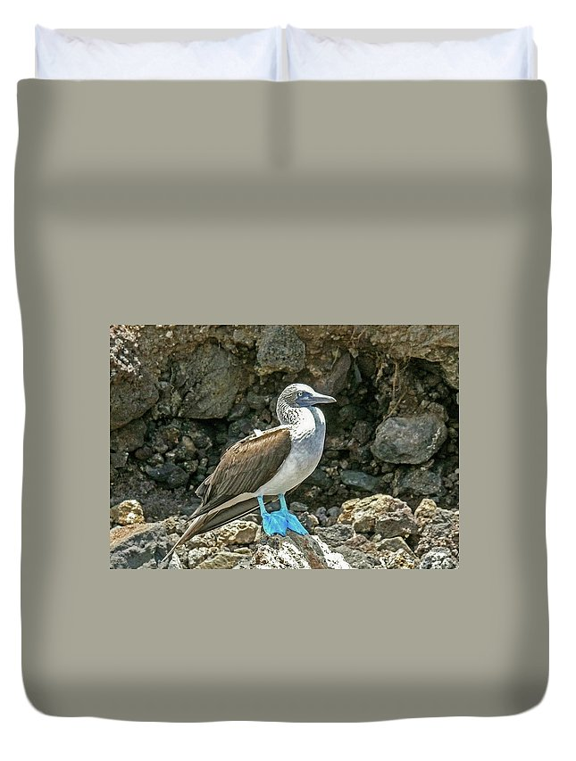 Blue Footed Boobie Duvet Cover featuring the photograph Blue Footed Boobie by Elizabeth Hershkowitz