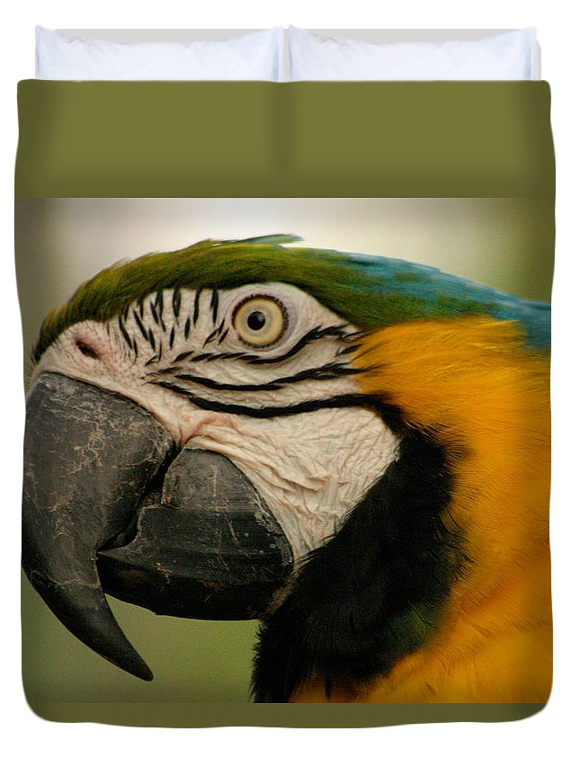 Parrot Duvet Cover featuring the photograph Blue Gold Macaw South America by Ralph A Ledergerber-Photography