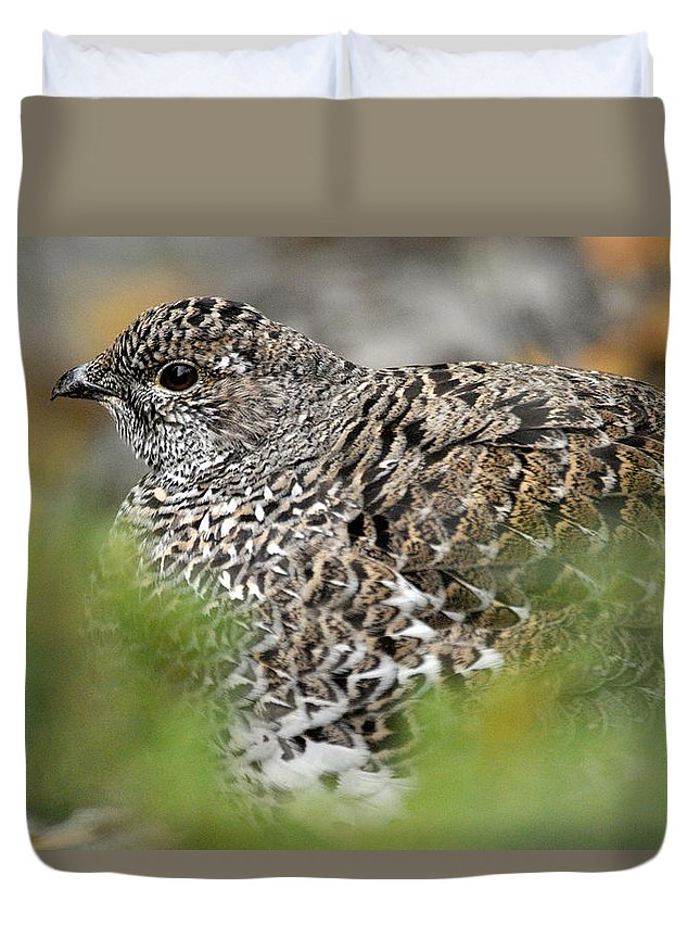 Blue Grouse Duvet Cover featuring the photograph Blue Grouse Hen 1 by Larry Ricker
