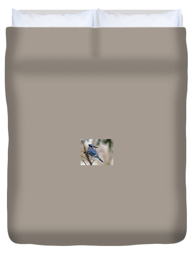 Blue Jay Duvet Cover featuring the photograph Blue Jay by Gaby Swanson