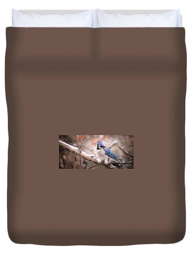Aves Duvet Cover featuring the photograph Blue Jay In Winter by Heather Hubbard