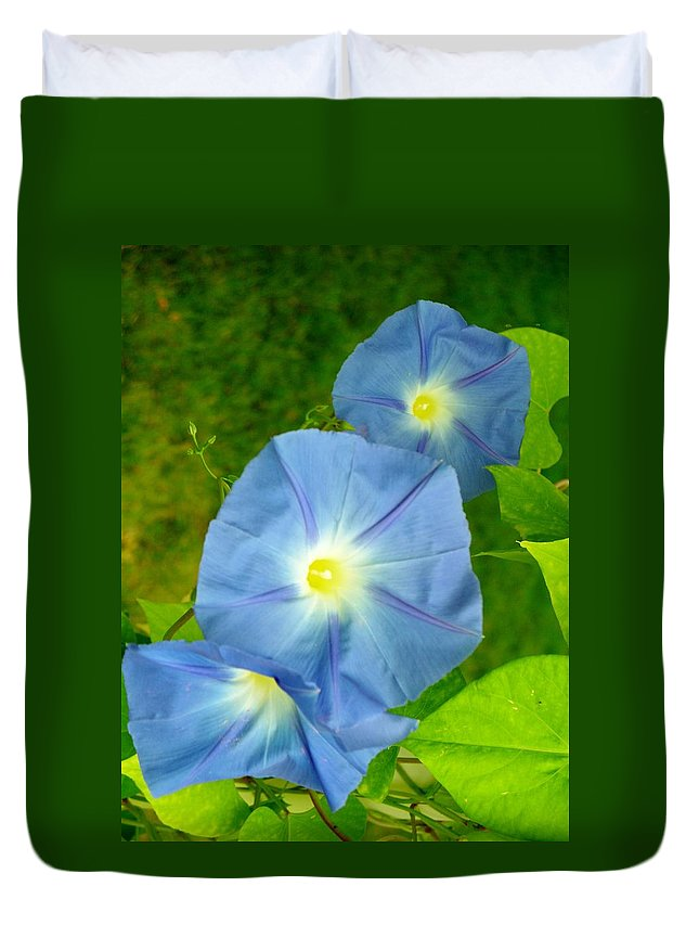 Nature Duvet Cover featuring the photograph Blue Morning Glories by Sheli Kesteloot
