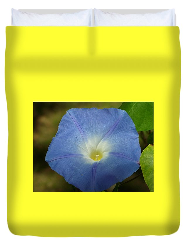 Flower Duvet Cover featuring the photograph Blue Morning Glory by Sheli Kesteloot