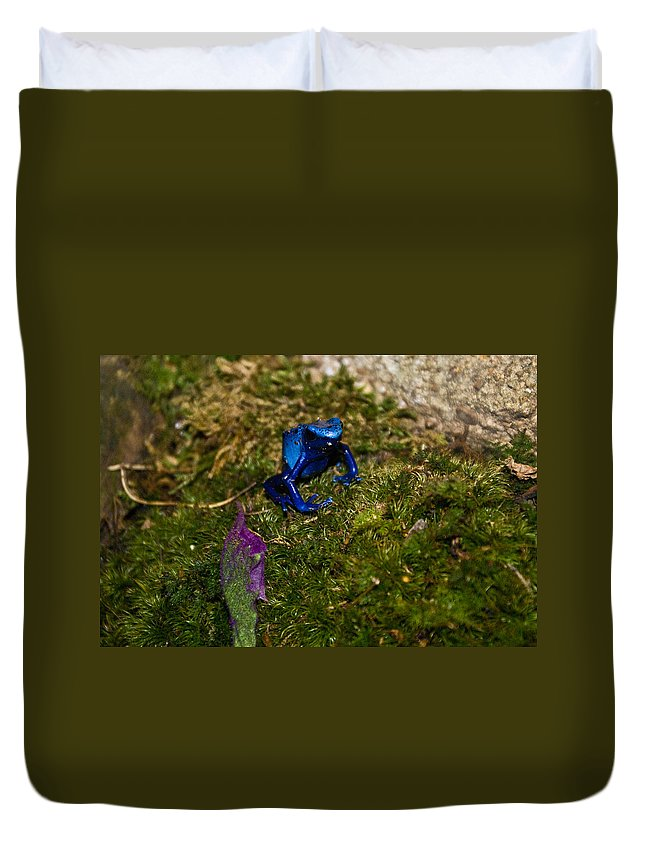 Blue Duvet Cover featuring the photograph Blue Poison Arrow Frog by Douglas Barnett