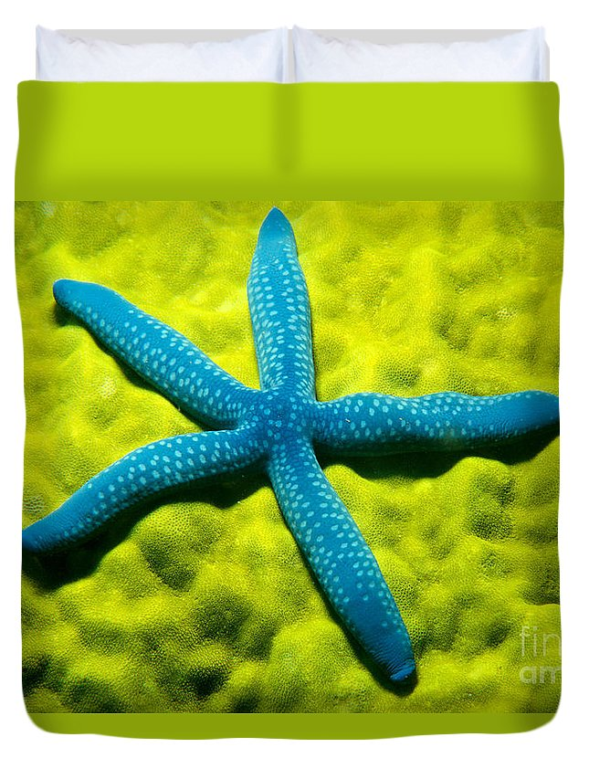 Animal Art Duvet Cover featuring the photograph Blue Starfish On Poritirs by Mitch Warner - Printscapes