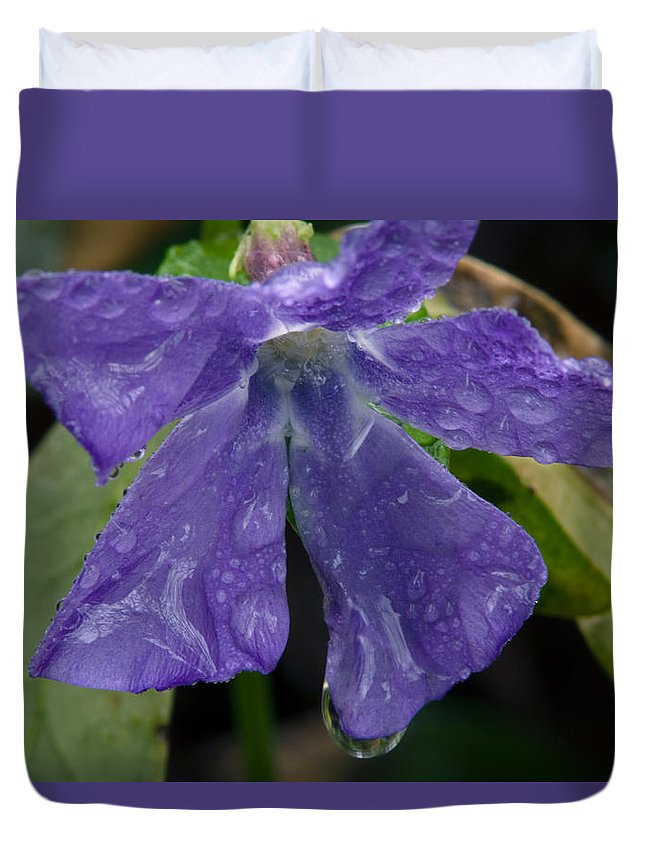 Blue Violets Duvet Cover featuring the photograph Blue Violet Raindrops by Irwin Barrett