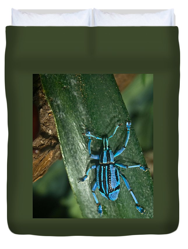 Weevil Duvet Cover featuring the photograph Blue Weevel by Douglas Barnett