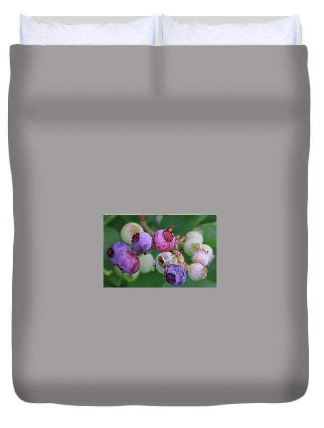 Blueberry Duvet Cover featuring the photograph Blueberries On The Vine 5 by Cathy Lindsey