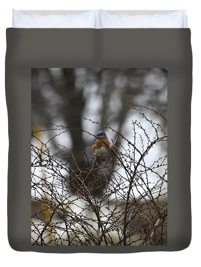 Eastern Duvet Cover featuring the photograph Bluebird In Briars by Teresa Mucha