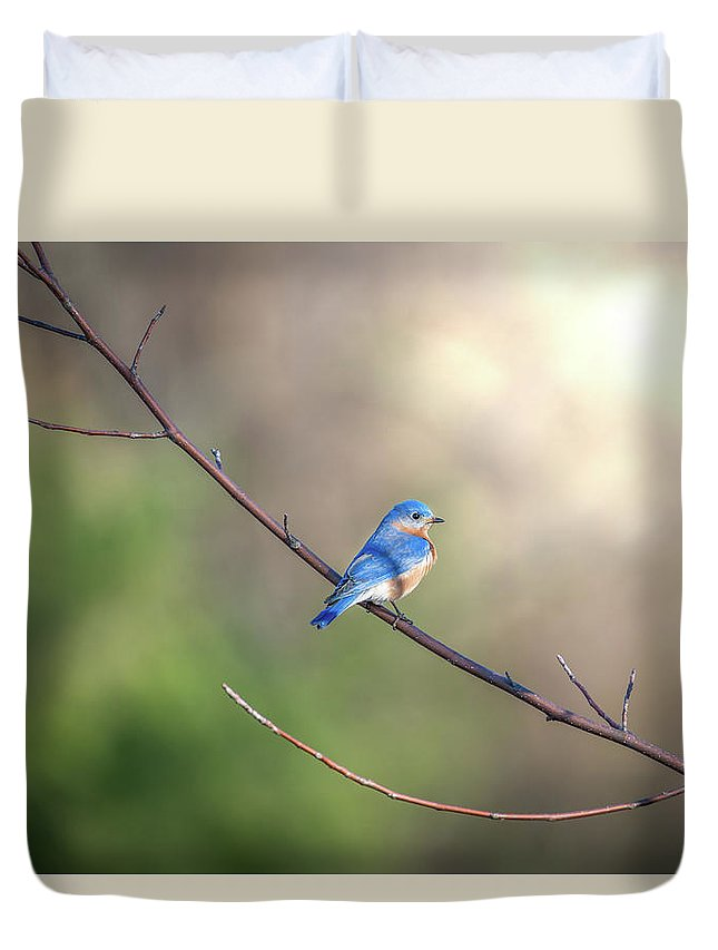 Bluebird Duvet Cover featuring the photograph Bluebird Perched On A Tree Branch In The Sunlight by Patrick Wolf